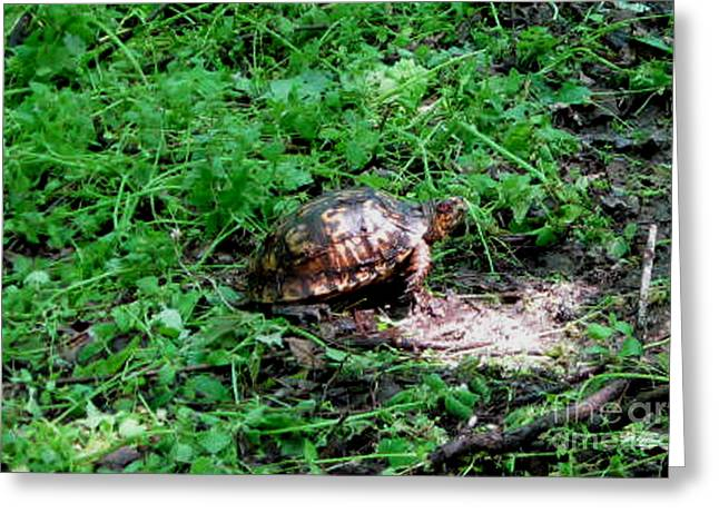 Reptiles Pyrography Greeting Cards - Box Turtle  Greeting Card by The Kepharts
