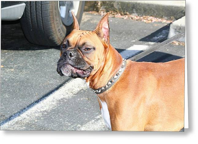 Boxeur Greeting Cards - Boxer dog Greeting Card by Ritmo Boxer Designs