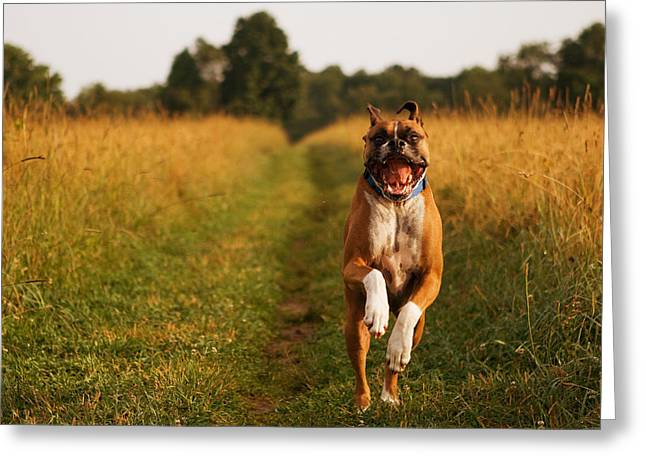 Dog Photographs Greeting Cards - Boxer Dog Running Happily Through Field Greeting Card by Stephanie McDowell