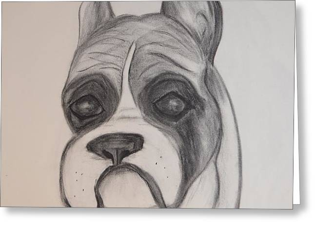 Boxer Greeting Card by Maria Urso
