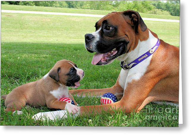 Boxer Greeting Cards - Boxer Mommy and Pup Greeting Card by Renae Laughner