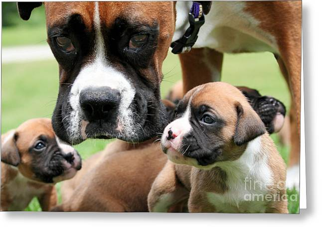Canine Greeting Cards - Boxer Mommy Watch Over Pups  Greeting Card by Renae Laughner