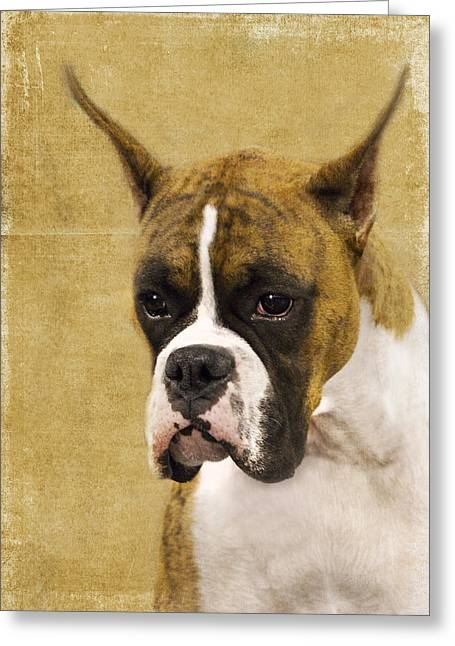 Boxer Dog Greeting Cards - Boxer Greeting Card by Rebecca Cozart