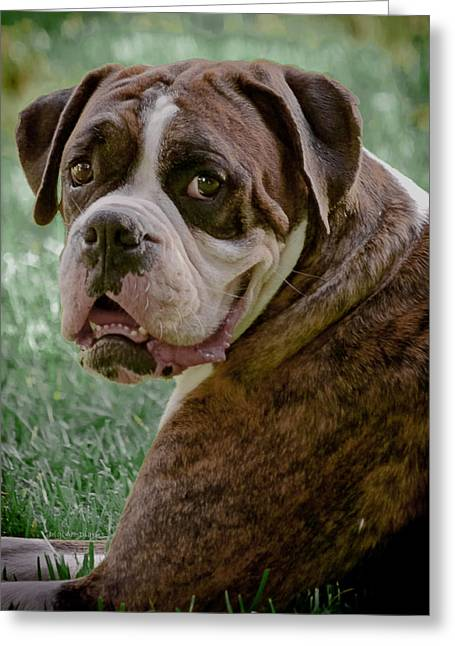 Boxer Greeting Cards - Boxer Smiles Greeting Card by DigiArt Diaries by Vicky B Fuller