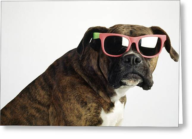 Shot Glass Greeting Cards - Boxer Wearing Sunglasses Greeting Card by Ron Nickel