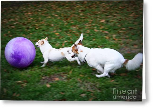 Dog Playing Ball Greeting Cards - Boys will be Boys Greeting Card by Mandy Shupp