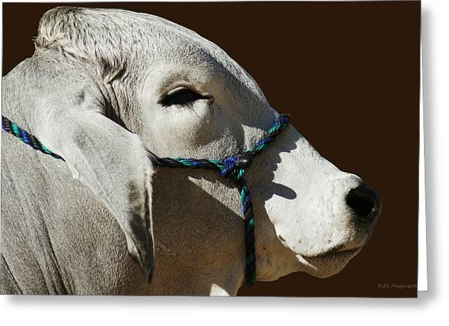Sacred Cow Greeting Cards - Brahman Portrait Greeting Card by DiDi Higginbotham