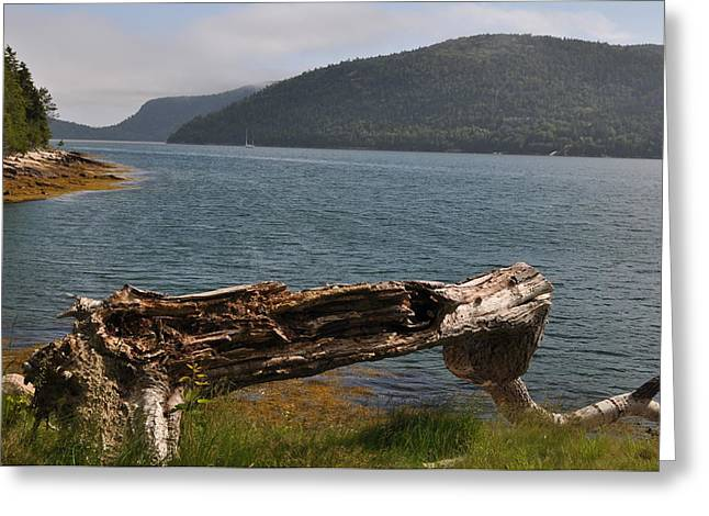 Somes Sound Greeting Cards - Branch at Somes Sound Greeting Card by Jeff Moose