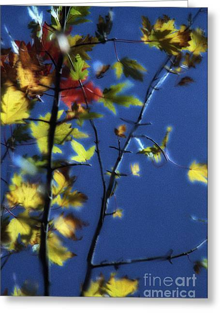 Trees Reflecting In Water Greeting Cards - Branch Reflection Greeting Card by Janeen Wassink Searles