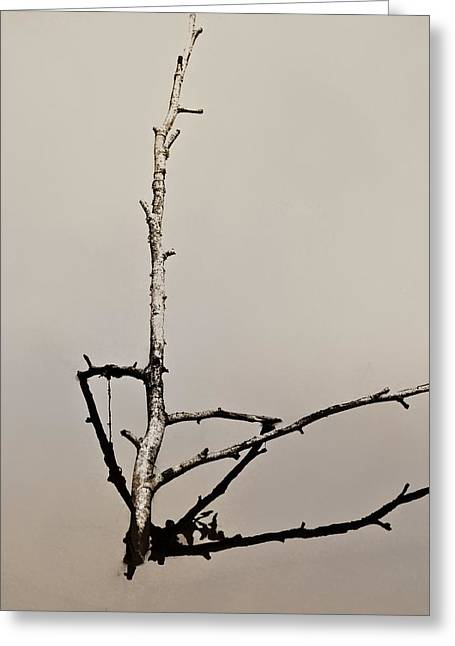 Reflection In Water Greeting Cards - Branch Two Greeting Card by Odd Jeppesen