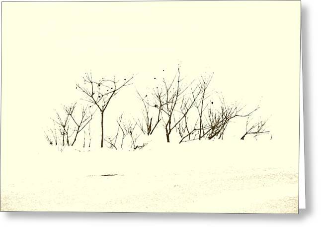 Braches Greeting Cards - Branches in Snow Greeting Card by Michael L Kimble