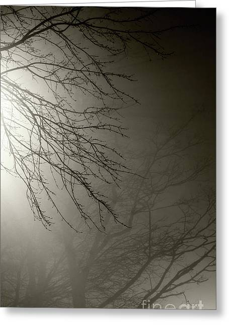 Streetlight Greeting Cards - Branches in the Fog Greeting Card by Susan Isakson