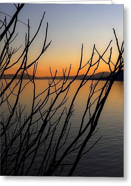 Silhouettes Greeting Cards - Branches In The Sunset Greeting Card by Joana Kruse