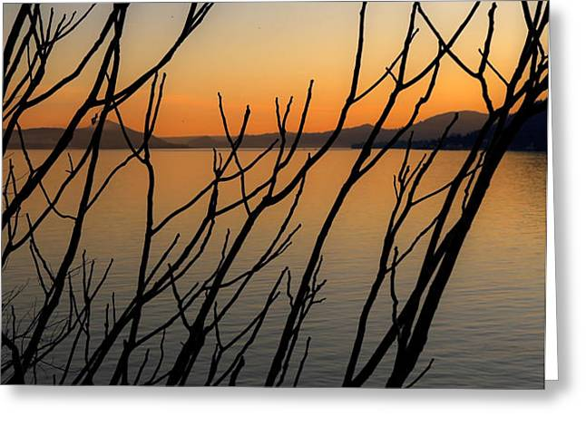 branches in the sunset Greeting Card by Joana Kruse