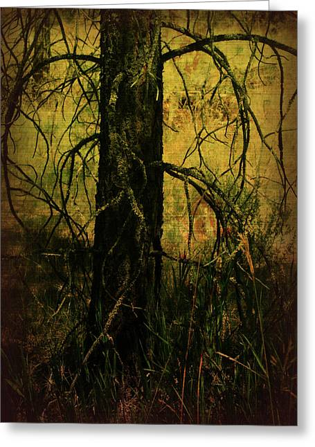 Backlit Prints Greeting Cards - Branching Out Greeting Card by Bonnie Bruno