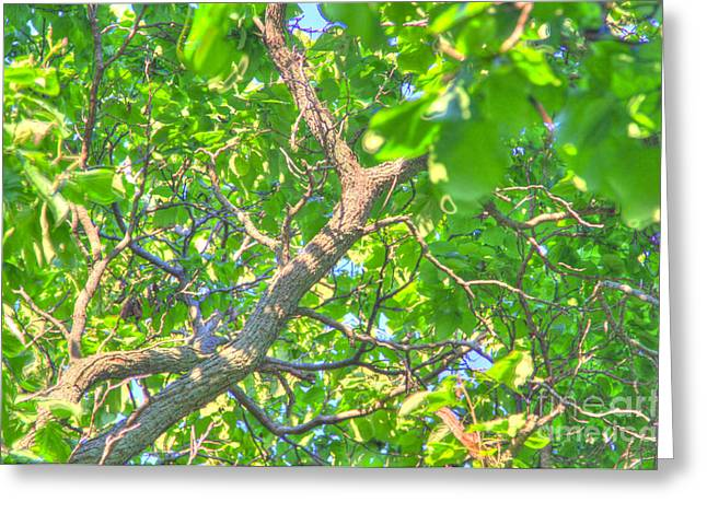 Tree Roots Photographs Greeting Cards - Branching Out Greeting Card by Robert Pearson