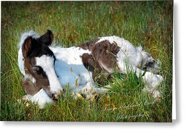 Gypsy Horse Greeting Cards - Brand New Isaac Greeting Card by Terry Kirkland Cook
