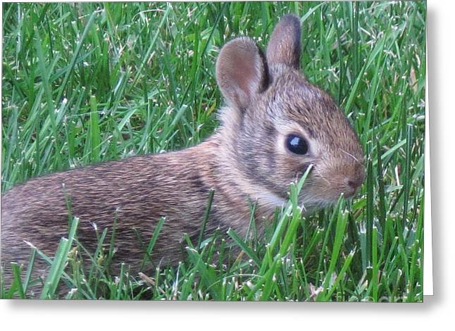 Brave Yard Bunny Greeting Card by Donna Cavender