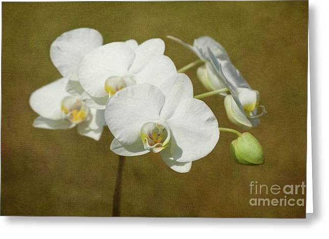 White Orchid Greeting Cards - Brazen Beauty Greeting Card by Reflective Moment Photography And Digital Art Images
