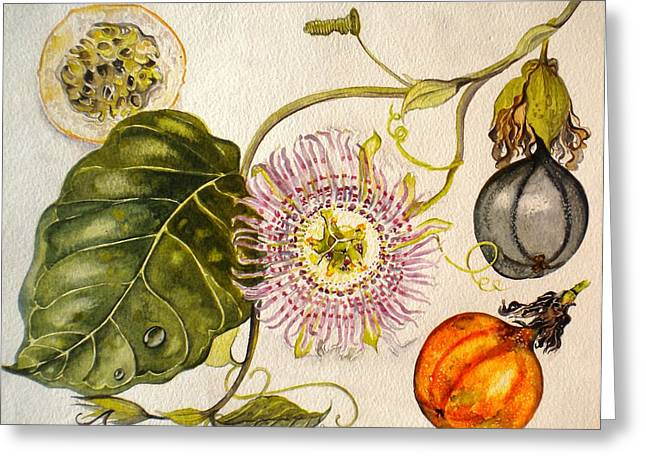 Passion Fruit Paintings Greeting Cards - Brazilian Passion Fruit             Passiflora ligularis Seme Greeting Card by Sandra Phryce-Jones