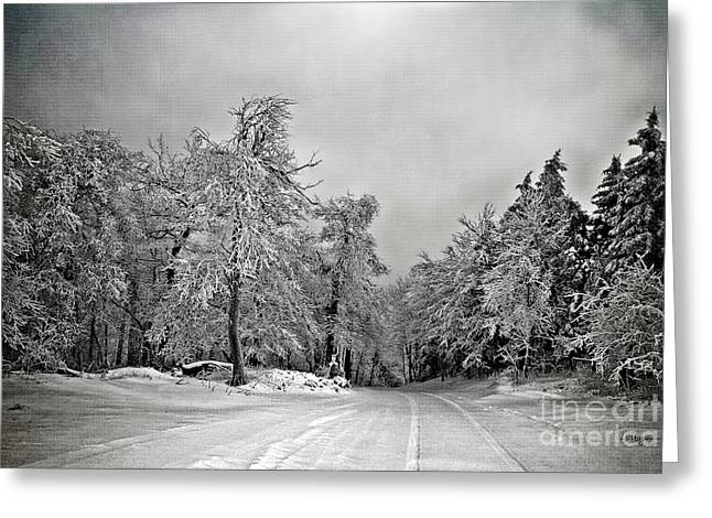 White Snow On Trees Greeting Cards - Break In The Storm Greeting Card by Lois Bryan