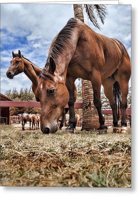 Brown Horse Photographs Greeting Cards - Break Time Greeting Card by Kelley King
