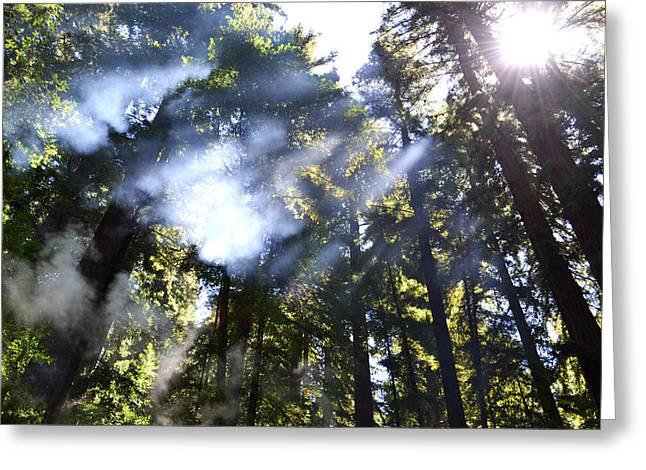 Matt Hanson Greeting Cards - Breaking Through the Trees Greeting Card by Matt Hanson