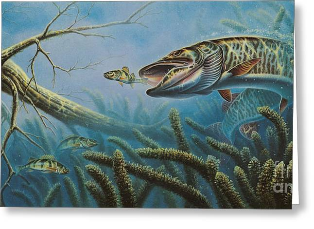 Muskies Greeting Cards - Breakline Hunter Musky Greeting Card by JQ Licensing