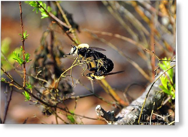Al Powell Photography Usa Greeting Cards - Breeding Bees Greeting Card by Al Powell Photography USA