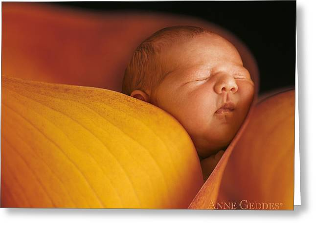 Calla Greeting Cards - Brian in Calla Lily Greeting Card by Anne Geddes