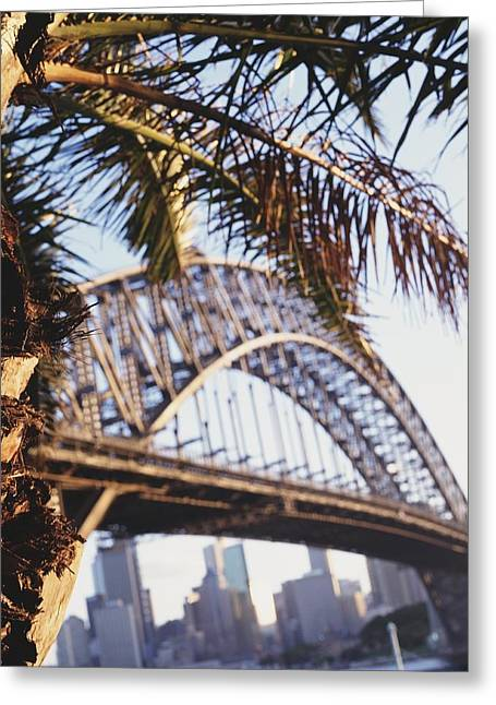 Urban Images Greeting Cards - Bridge And City With Palm In The Greeting Card by Axiom Photographic