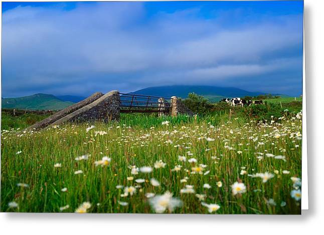 Bridge Of Flowers Greeting Cards - Bridge At Castlegregory, Dingle Greeting Card by The Irish Image Collection