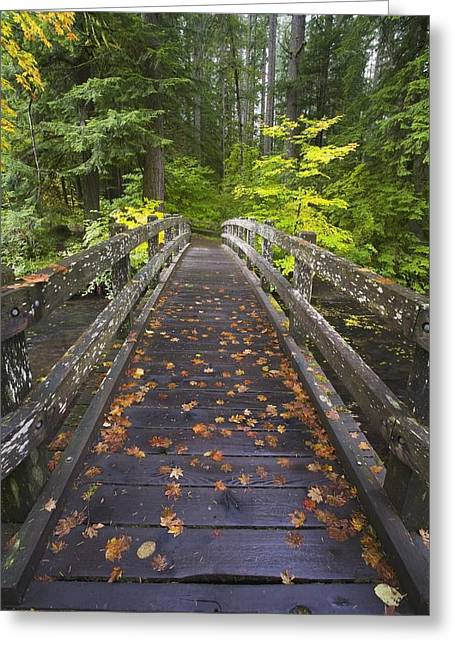 Fallen Leaf Greeting Cards - Bridge In A Park Greeting Card by Craig Tuttle