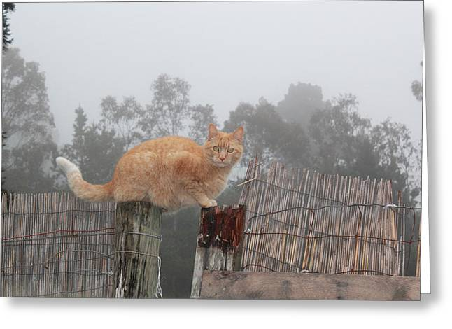 Bamboo Fence Greeting Cards - Bridging Cat Greeting Card by Ron McMath