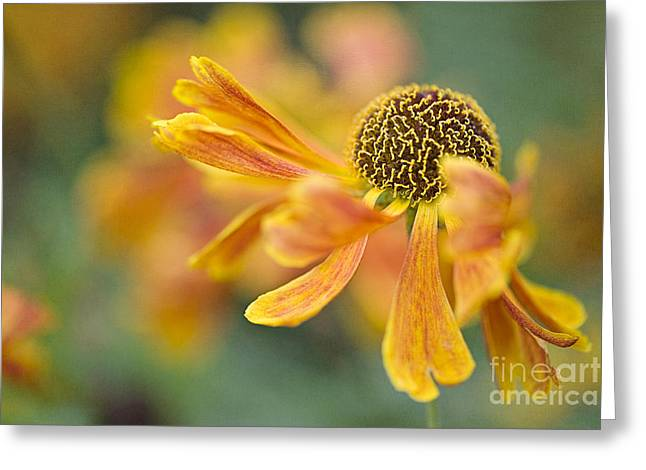 Sneezeweed Greeting Cards - Bright and Breezy  Greeting Card by Jacky Parker