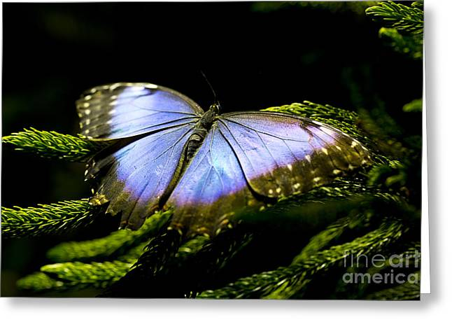 Leda Photography Greeting Cards - Bright Blue  Greeting Card by Leslie Leda