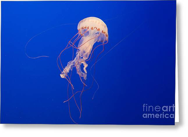 Jelly Fish Greeting Cards - Bright Jelly Fish Greeting Card by Darcy Michaelchuk