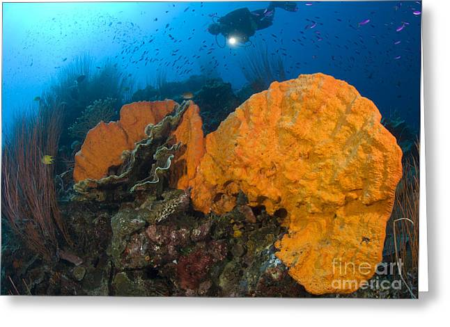 New Britain Greeting Cards - Bright Orange Sponge With Diver Greeting Card by Steve Jones