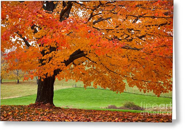 Fallen Leaf Greeting Cards - Bright Pasture Greeting Card by Susan Cole Kelly