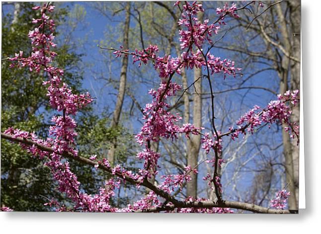 Bright Pink Rosebud Flowers Greeting Card by Brendan Reals