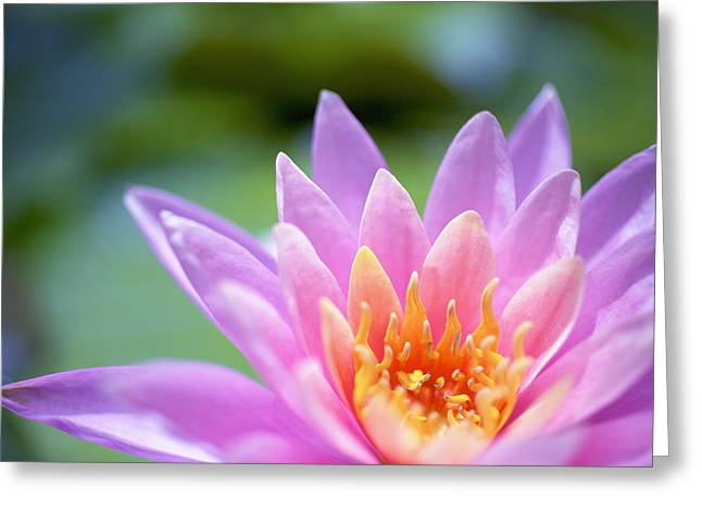 Bright Pink Water Lily II Greeting Card by Kicka Witte