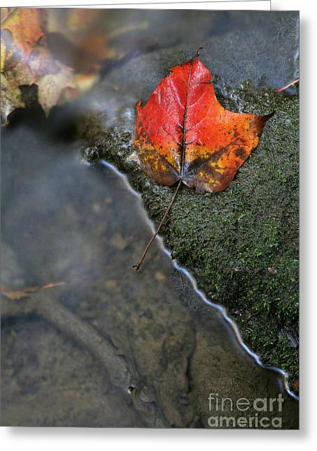 Chris Hill Greeting Cards - Bright Red Leaf Near a Stream Greeting Card by Chris Hill