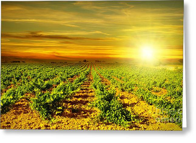 Grapevine Autumn Leaf Greeting Cards - Bright sunset at vineyard Greeting Card by Anna Omelchenko