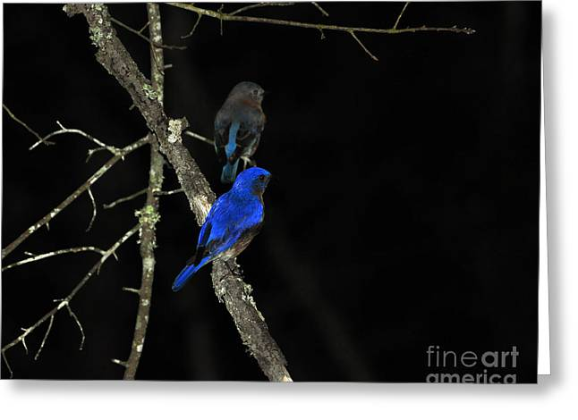 Al Powell Photography Usa Greeting Cards - Brilliant Blues Greeting Card by Al Powell Photography USA