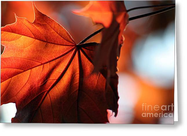 Chris Hill Greeting Cards - Brilliant Bronze Maple Leaf Greeting Card by Chris Hill