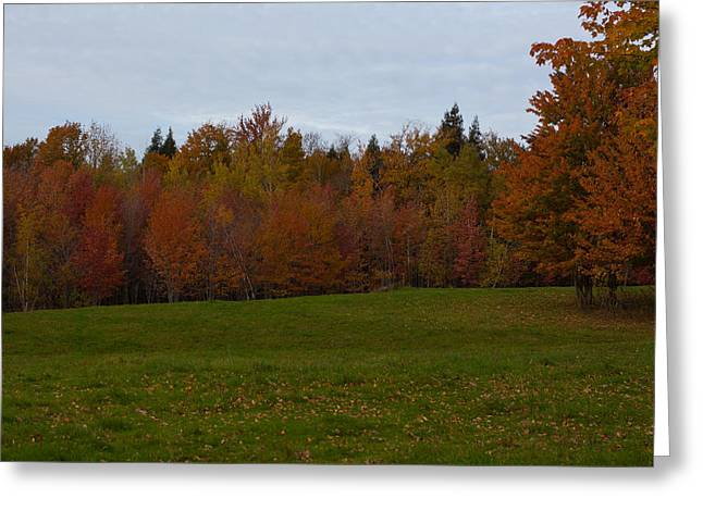 Foliage Photographs Greeting Cards - Brilliant Colors Greeting Card by Robert  Torkomian