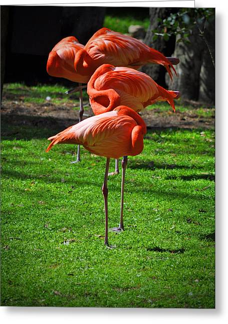 Brilliant Flamingos Greeting Card by Mary Machare