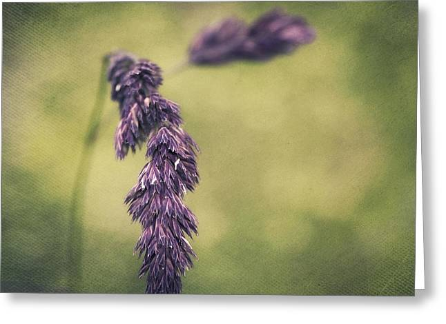 Green Blade Of Grass Greeting Cards - Brin dherbe Greeting Card by Angela Doelling AD DESIGN Photo and PhotoArt