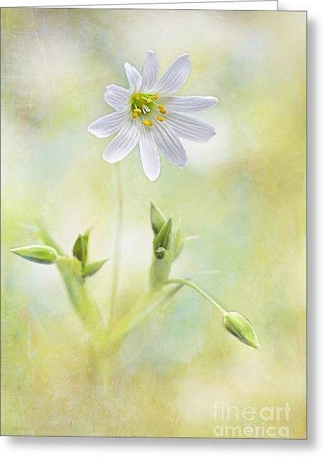 Bring Me Sunshine Greeting Card by Jacky Parker