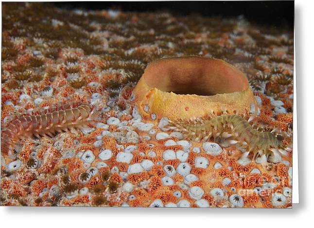 Bristles Greeting Cards - Bristle Worms Feeding On A Large Sponge Greeting Card by Terry Moore
